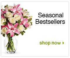 Seasonal Bestsellers